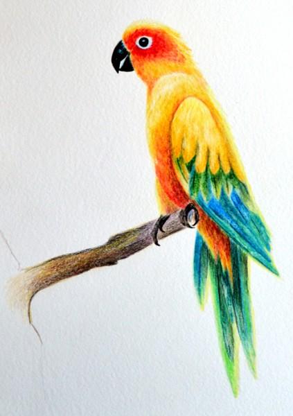 parrot-final