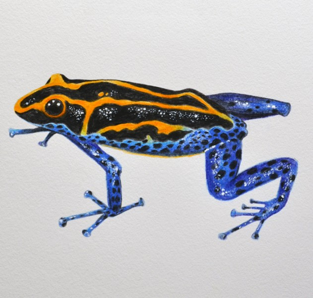 A tropical frog
